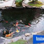 Cara Membuat Kolam Ikan Dengan Mudah